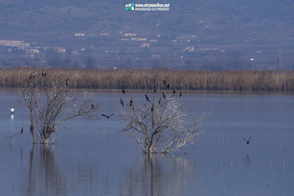 Lake Koroneia - Lagada - Stavros - Villa Riviera - www.villariviera.gr