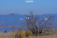 Lake Koroneia- Lagada - Stavros - Villa Riviera - www.villariviera.gr